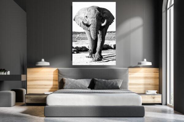 Kalahari Elephant Mockup