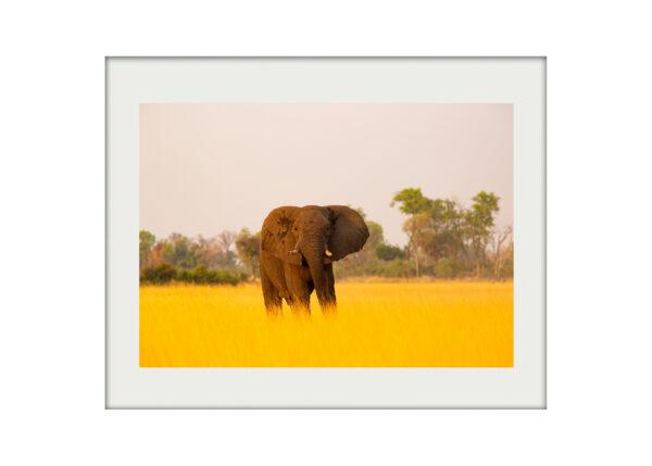 Okavango Giant A3