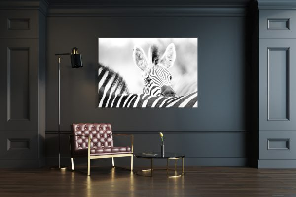 Zebra Youngster Mockup