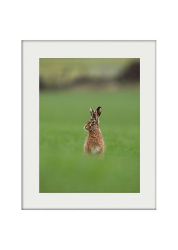 Hare Statuesque A3 mockup