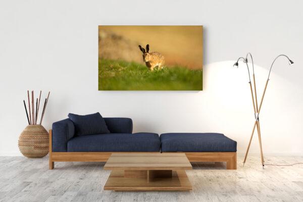 Curious Hare Mockup