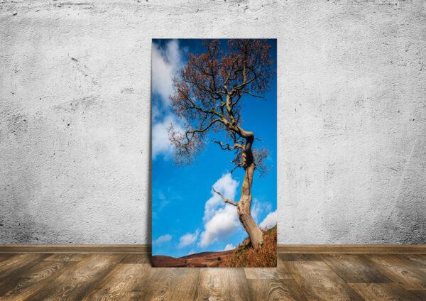 Moorland Tree Mockup