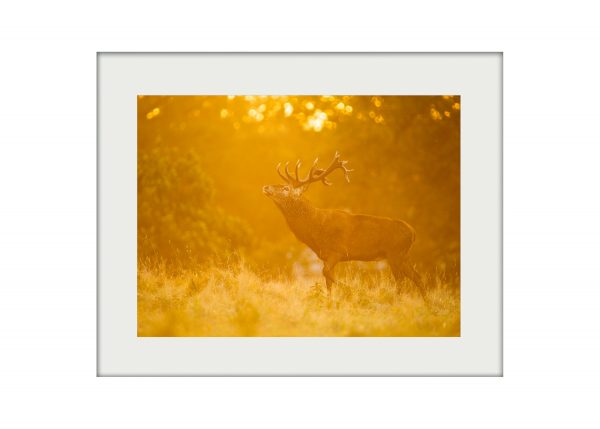 Stag in Gold A3 Mockup