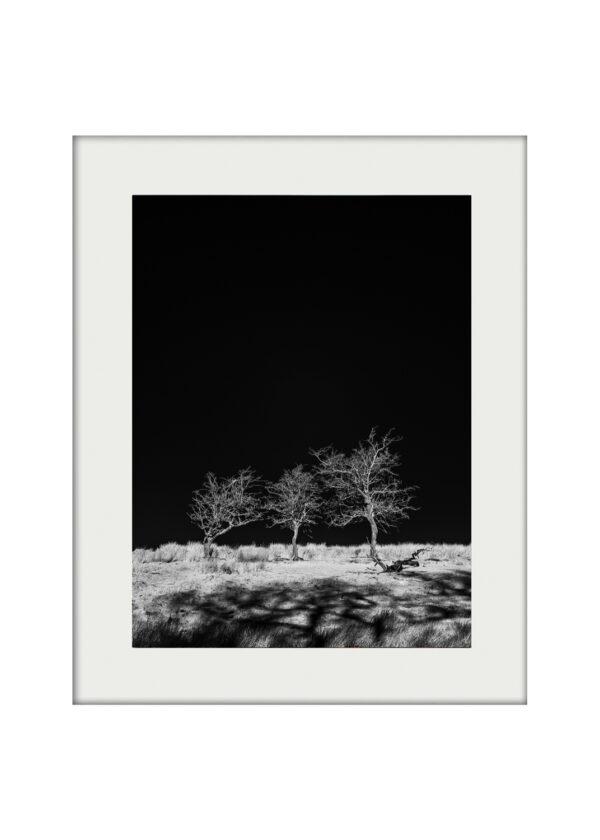 Three Hawthorns A3 Mockup-2