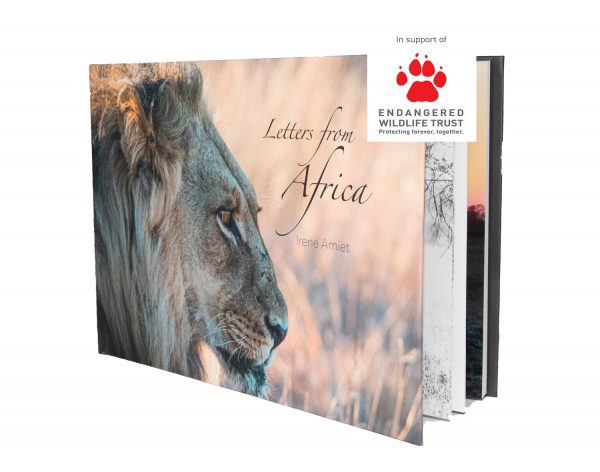 Letters From Africa Book