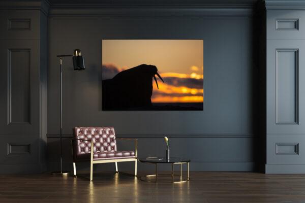 Silhouetted Walrus Mockup