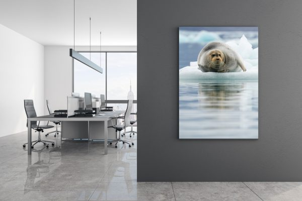 Seal Reflections Mockup
