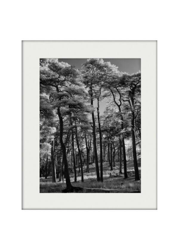 A3 Mockup | Woodglow