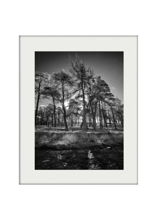 A3 Mockup Dancing Trees