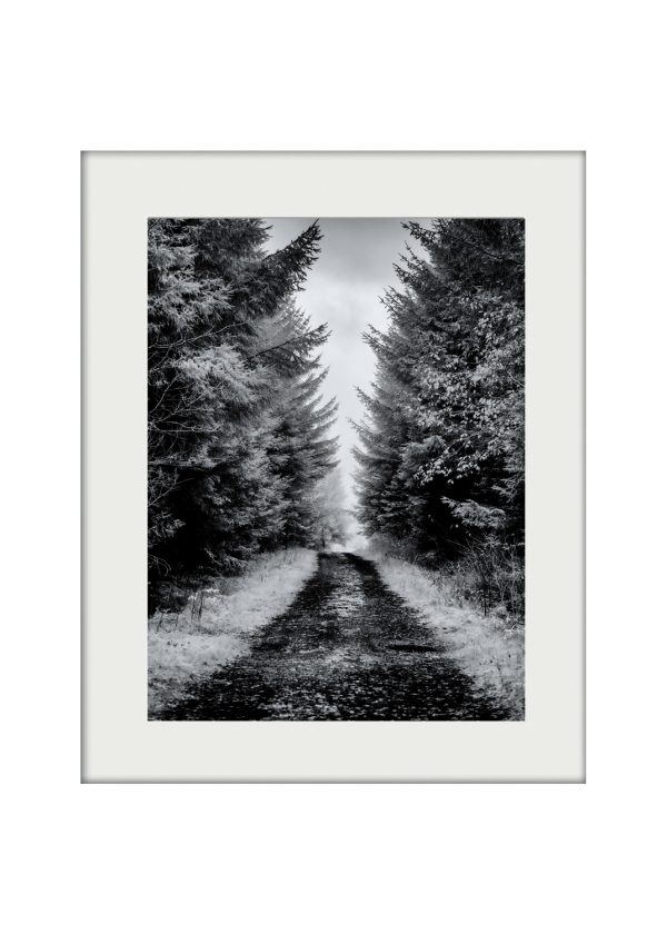 A3 Mockup Forest Path