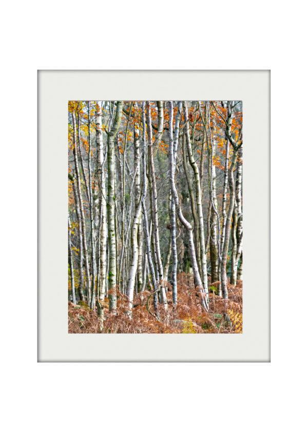 A3 Mockup Silver Birches
