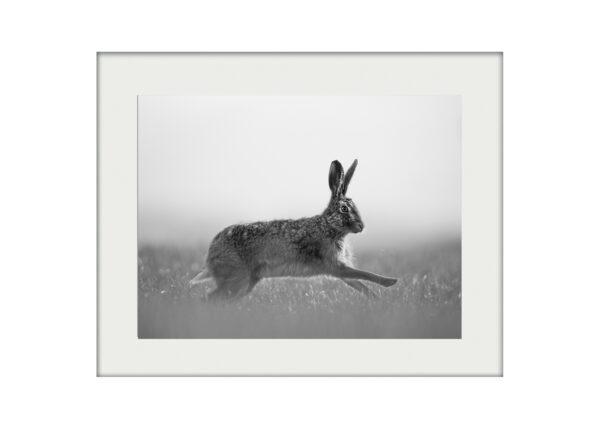 A3 Mockup | Hare Jump