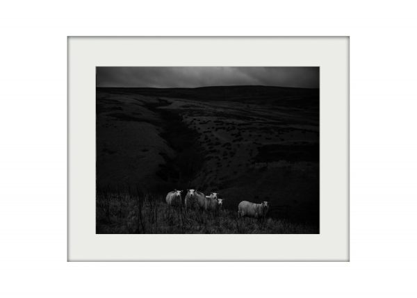 A3 _ Sheep on the High Moors