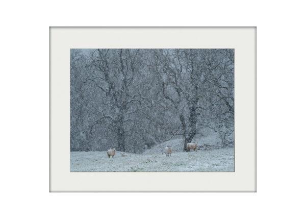 A3 Mockup _ Snowfall