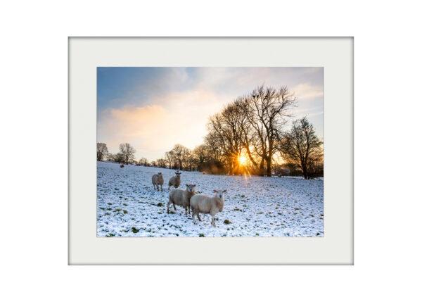 A3 Mockup _ Winter Sunset Sheep