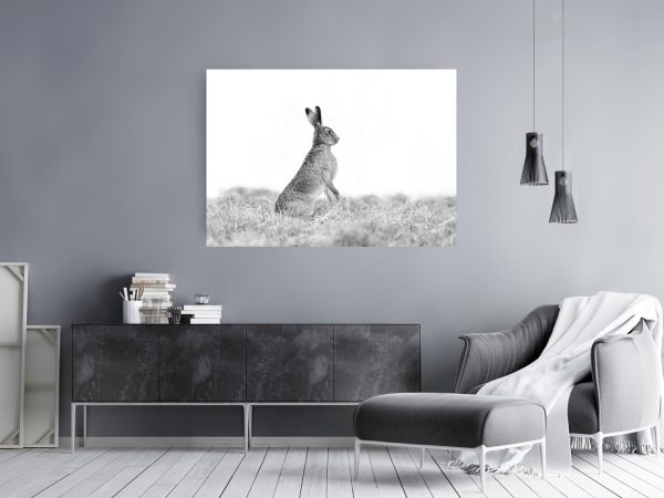 Spring Hare Mockup