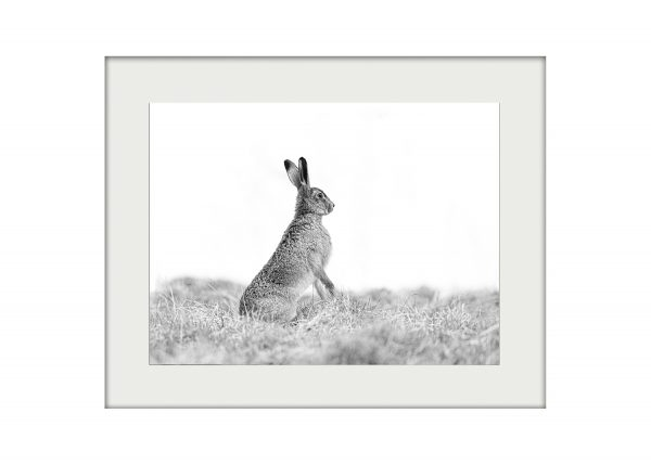 Spring Hare _ A3 Mockup