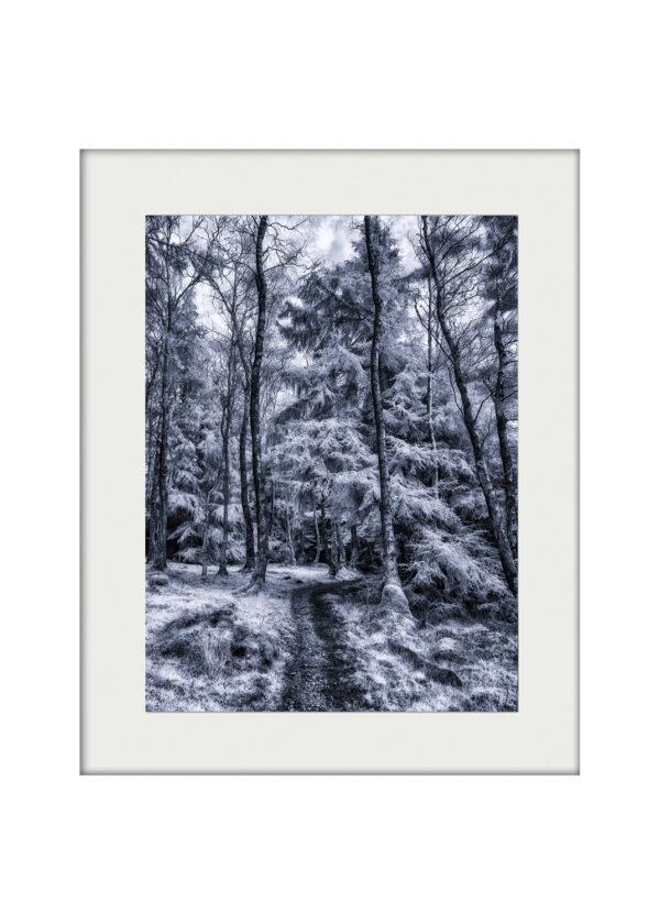 Gisburn Forest Magic   A3 Mockup