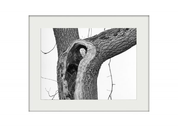 Watcher in a Tree _ A3 Mockup