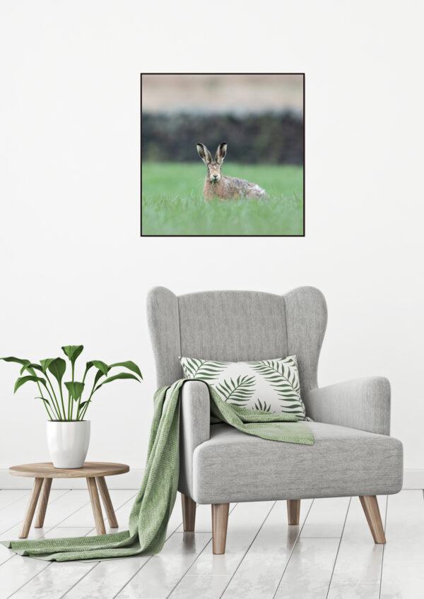Mockup Hare Encounter